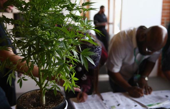 At Denver's First Cannabis Job Fair, New Employment Opportunities